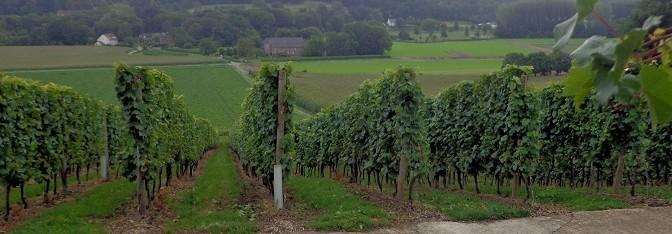 Wijndag Zuid Limburg 5 september 2015