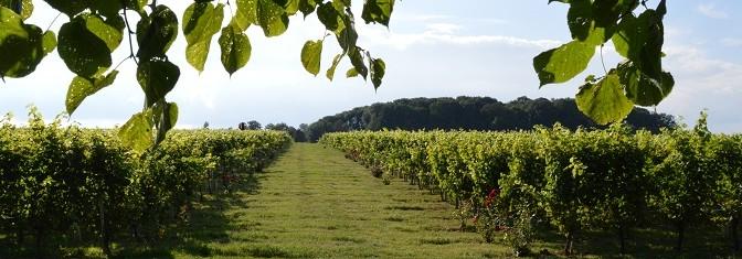 Wijndag Belgisch Limburg 2016